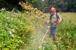 Cutting back the grass and balsam.