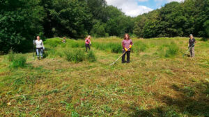 Raking the meadow