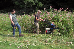 Cutting back the balsam with the mower.
