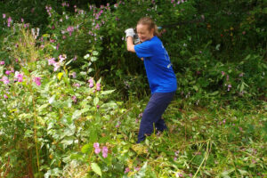 Cutting down Himalayan balsam.