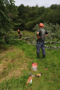 Cutting up a fallen tree to use in the hibernaculum.