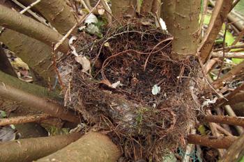 Doffcocker Nest
