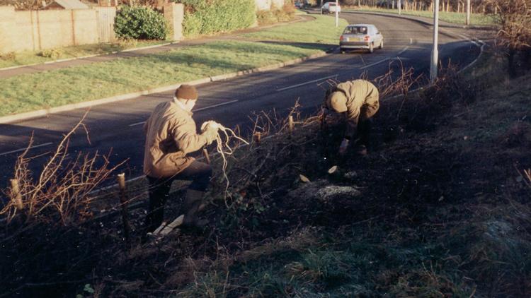 1999: Eatock Lodge hedgelaying