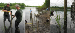 2010: Blackleach reed bed creation.