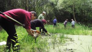 2017: Kearsley Moss, pond cleaning.