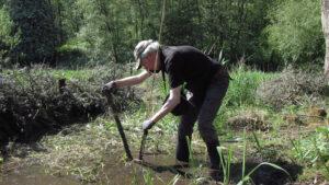 Planting the rhizomes