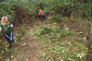 A cleared area.